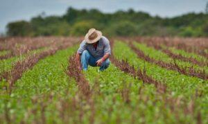 BB Seguros indeniza produtores rurais que tiveram perdas na safra 20192020