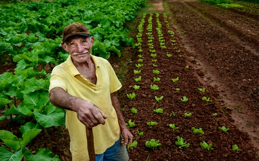 Seguro Rural MAPFRE registra bom desempenho no primeiro trimestre