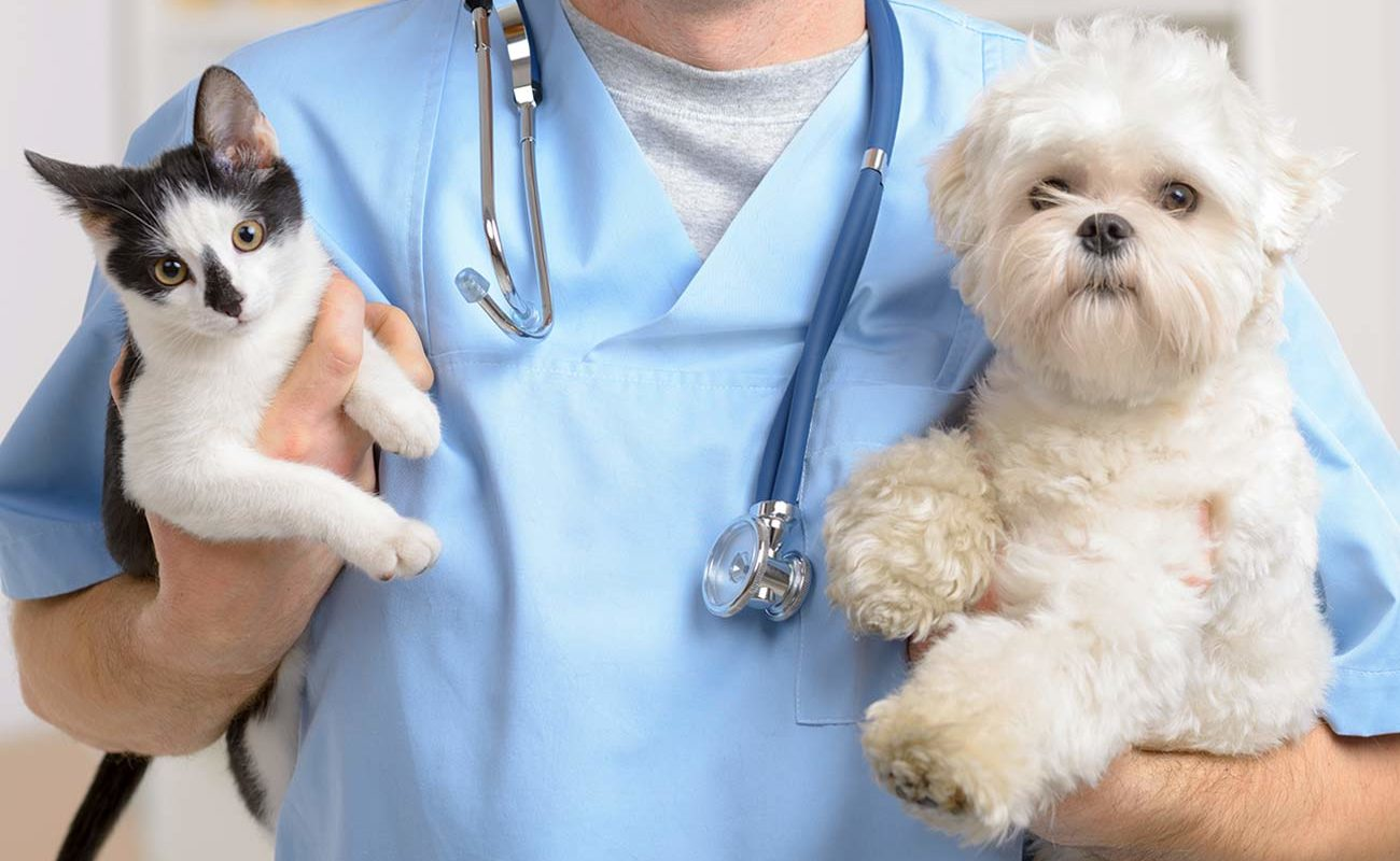 Insurtech Ciclic passa a aceitar pets como dependentes em serviço de saúde familiar